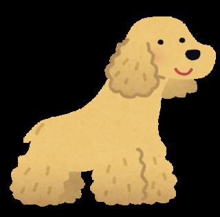 dog_american_cocker_spaniel.png